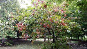 実りの秋を見つけました