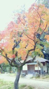 さまざまな彩りの紅葉
