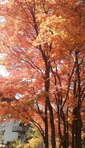 鮮やかな紅葉に寒さも忘れて