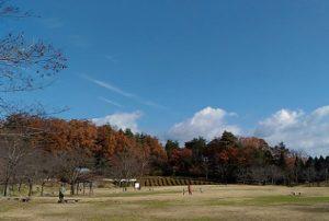 久しぶりに訪れた野外公園、爽やかな青空でした