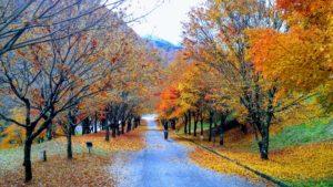 辰野の紅葉に包まれて秋を味わいました